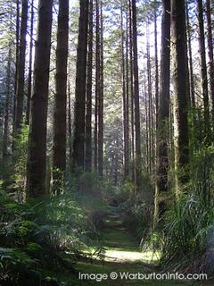 The Redwood Forrest - (California Redwood or Coast Redwood) Cement Creek Road, East Warburton VIC 3799
