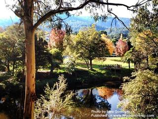Warburton VIC - Autumn Photo by Lara Goodger