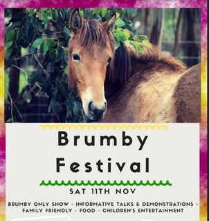 11 November 2017 - Brumby Festival Wesburn - Ph 0439 828 408