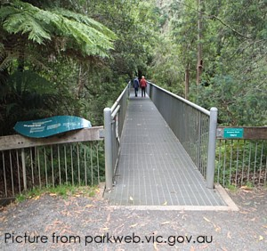 Rainforest Gallery - About 8kms / halfway up to Mt Donna Buang - Viewing Platform + optional 350m walk