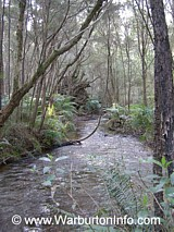Photo of Big Pats Creek / river