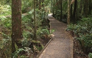 Ada Tree Walk - Warburton