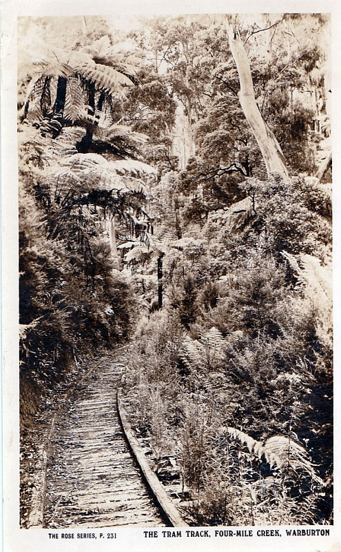 The Tram Track Four Mile Creek Warburton - 'The Rose Series P231'