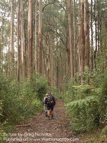 The ada tree is approx 26 km se of warburton slightly closer ne of